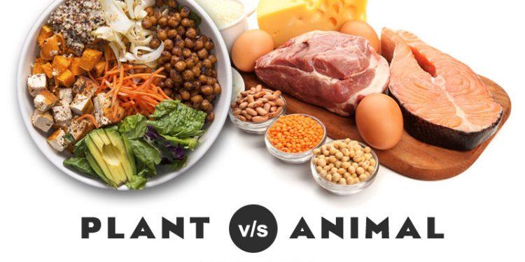 Protein Hewani vs Nabati, Manakah yang Lebih Bagus untuk Membentuk Otot?